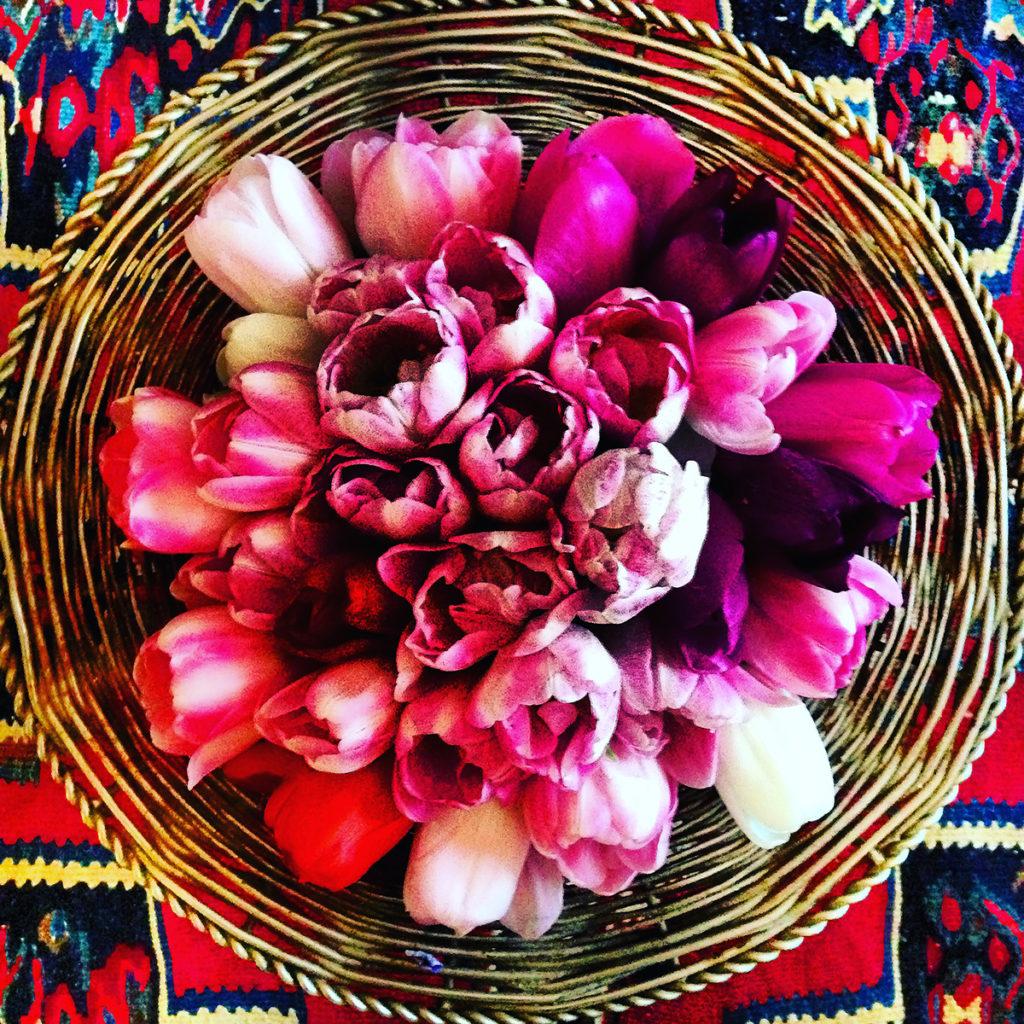 skal tulipaner ha varmt eller kaldt vann